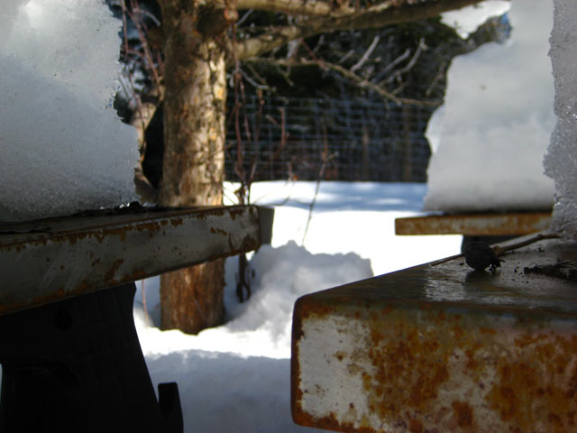 Organic matter between steel and snow.